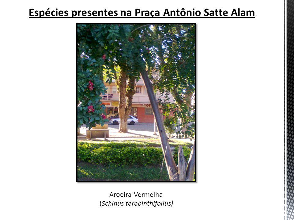 Espécies presentes na Praça Antônio Satte Alam