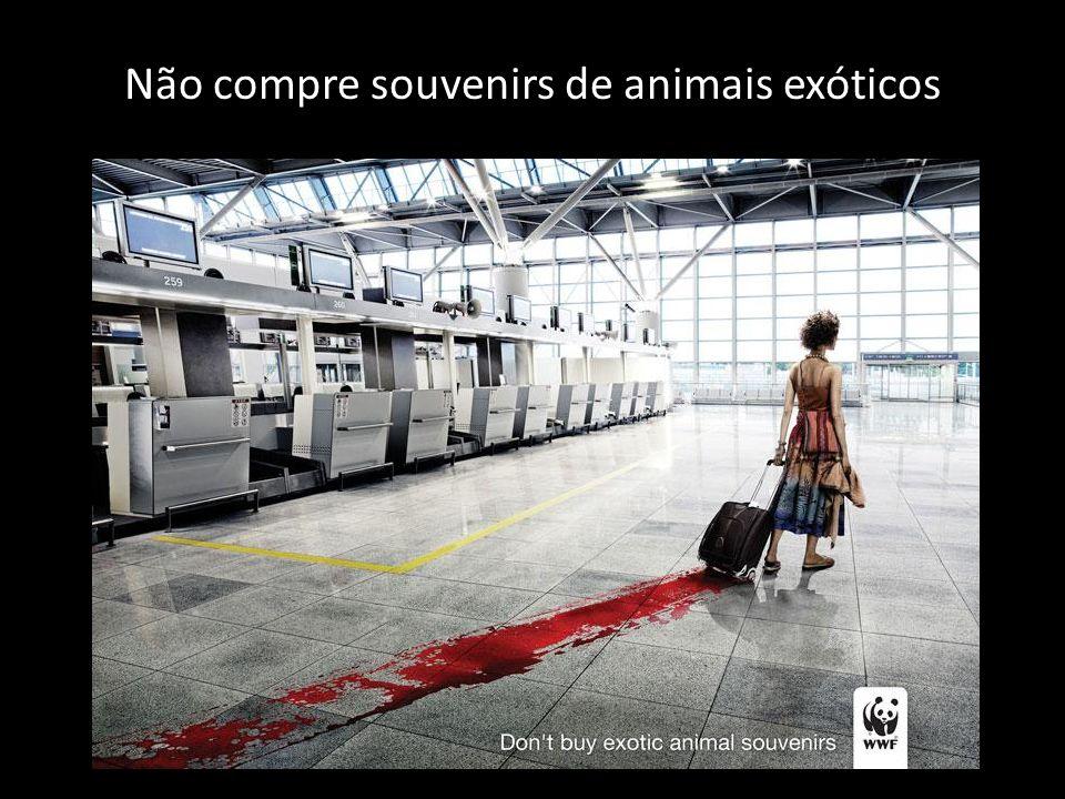 Não compre souvenirs de animais exóticos