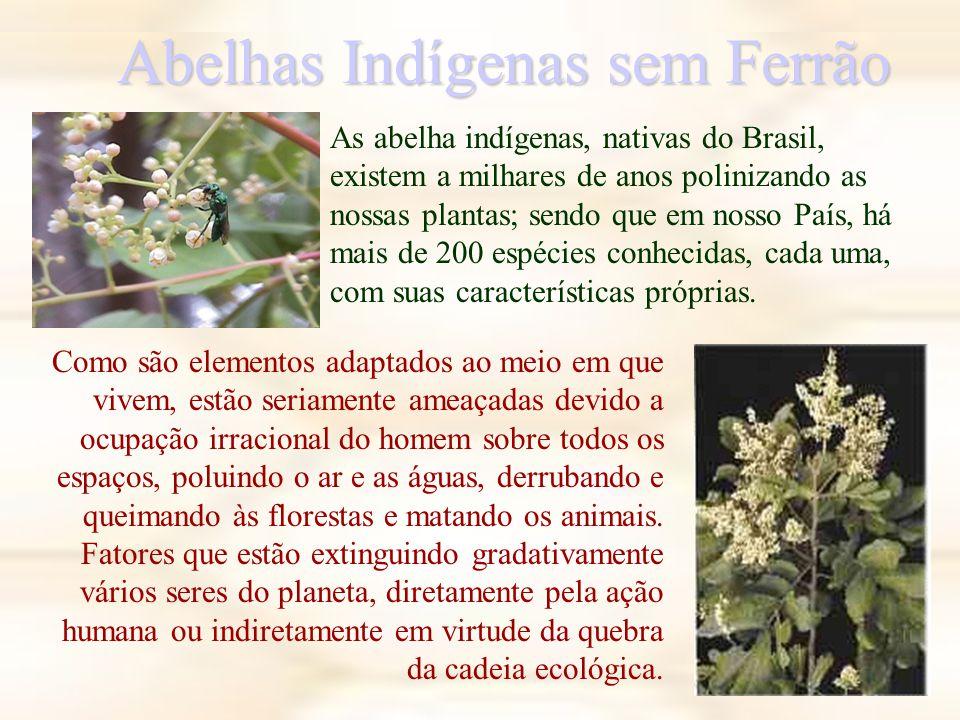 Abelhas Indígenas sem Ferrão