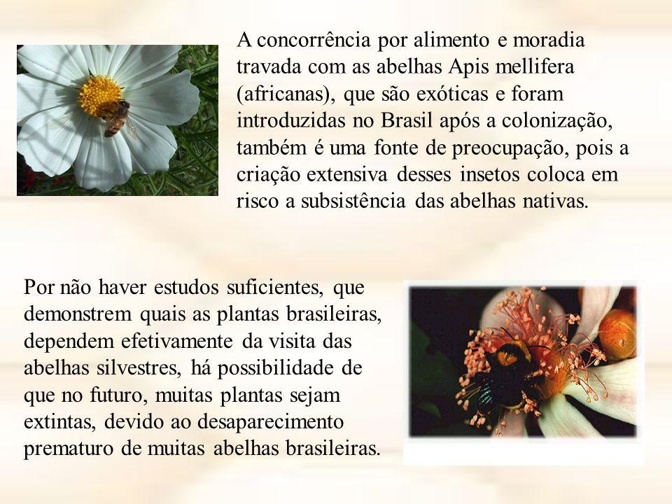 A concorrência por alimento e moradia travada com as abelhas Apis mellifera (africanas), que são exóticas e foram introduzidas no Brasil após a colonização, também é uma fonte de preocupação, pois a criação extensiva desses insetos coloca em risco a subsistência das abelhas nativas.