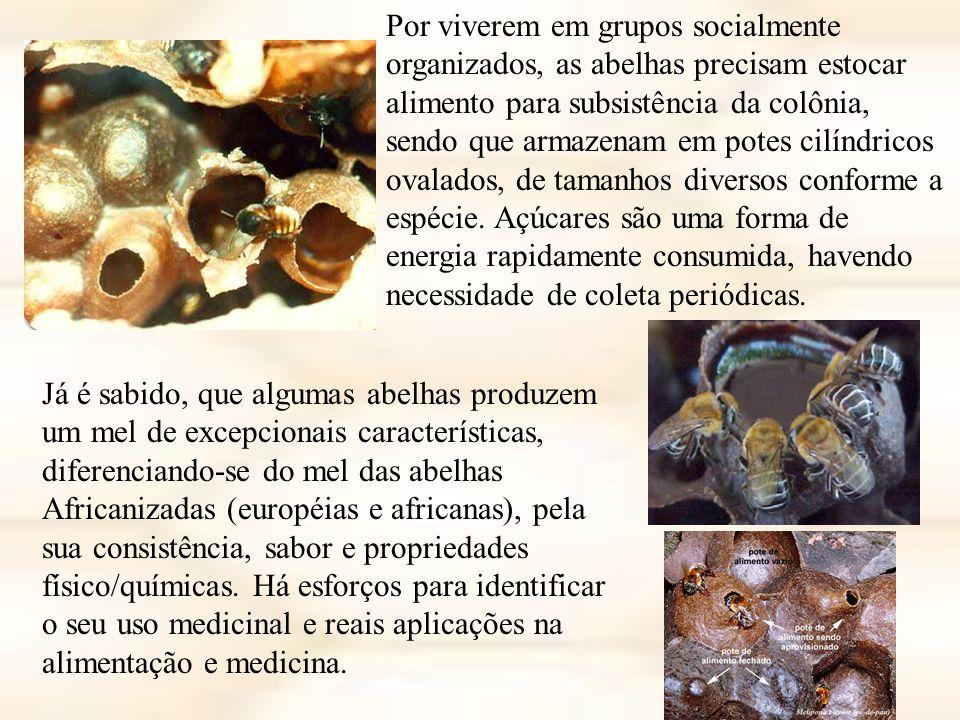 Por viverem em grupos socialmente organizados, as abelhas precisam estocar alimento para subsistência da colônia, sendo que armazenam em potes cilíndricos ovalados, de tamanhos diversos conforme a espécie. Açúcares são uma forma de energia rapidamente consumida, havendo necessidade de coleta periódicas.