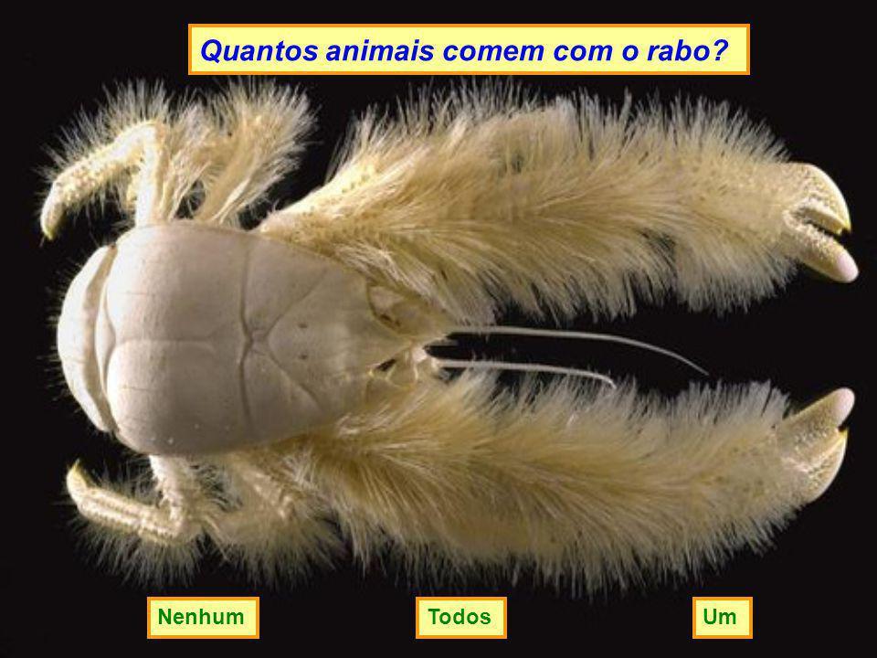 Quantos animais comem com o rabo