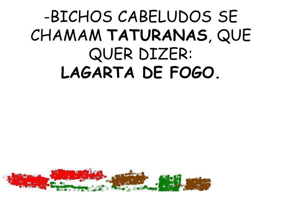 BICHOS CABELUDOS SE CHAMAM TATURANAS, QUE QUER DIZER: LAGARTA DE FOGO.