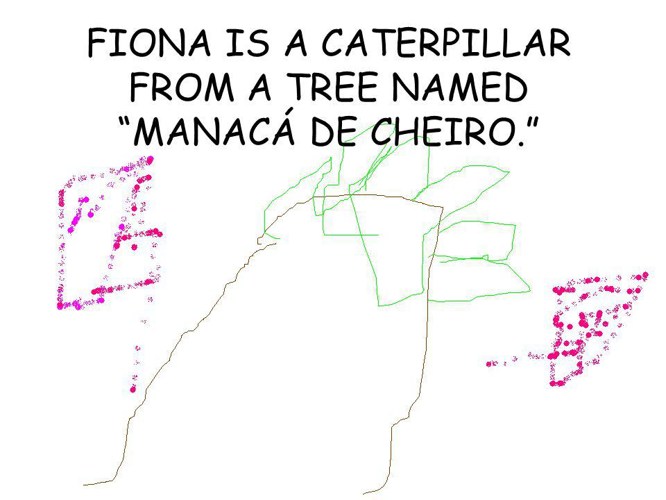 FIONA IS A CATERPILLAR FROM A TREE NAMED MANACÁ DE CHEIRO.