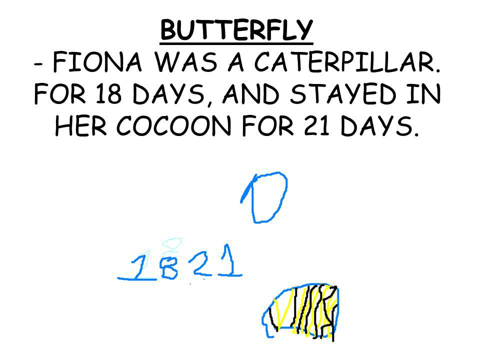 BUTTERFLY - FIONA WAS A CATERPILLAR