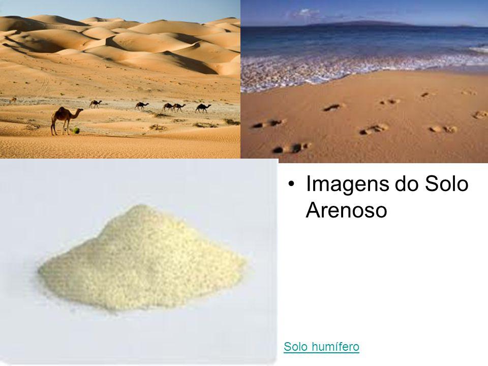 Imagens do Solo Arenoso