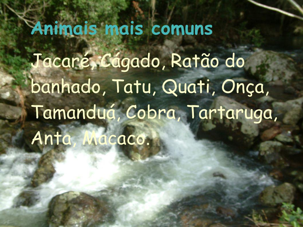 Animais mais comuns Jacaré, Cágado, Ratão do banhado, Tatu, Quati, Onça, Tamanduá, Cobra, Tartaruga, Anta, Macaco.