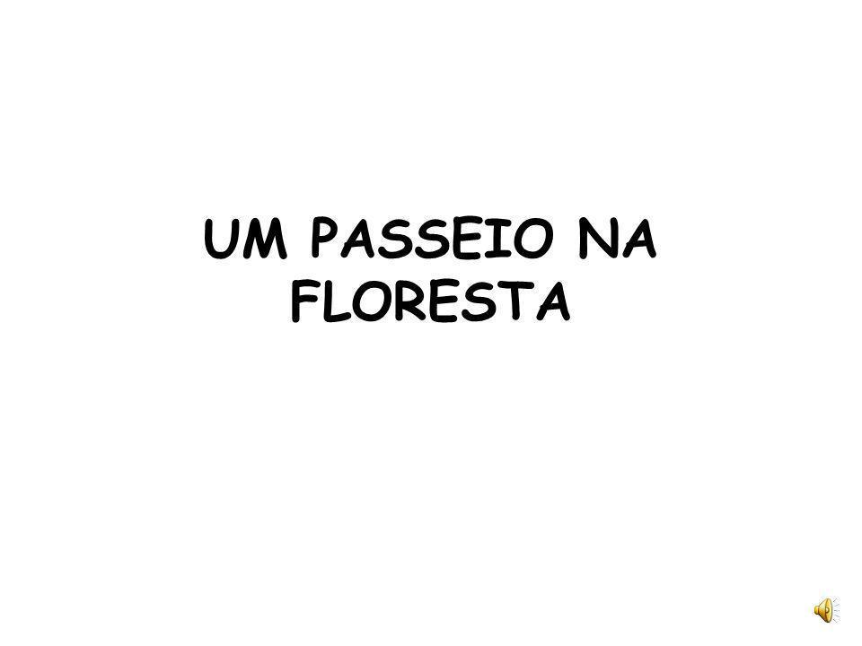 UM PASSEIO NA FLORESTA