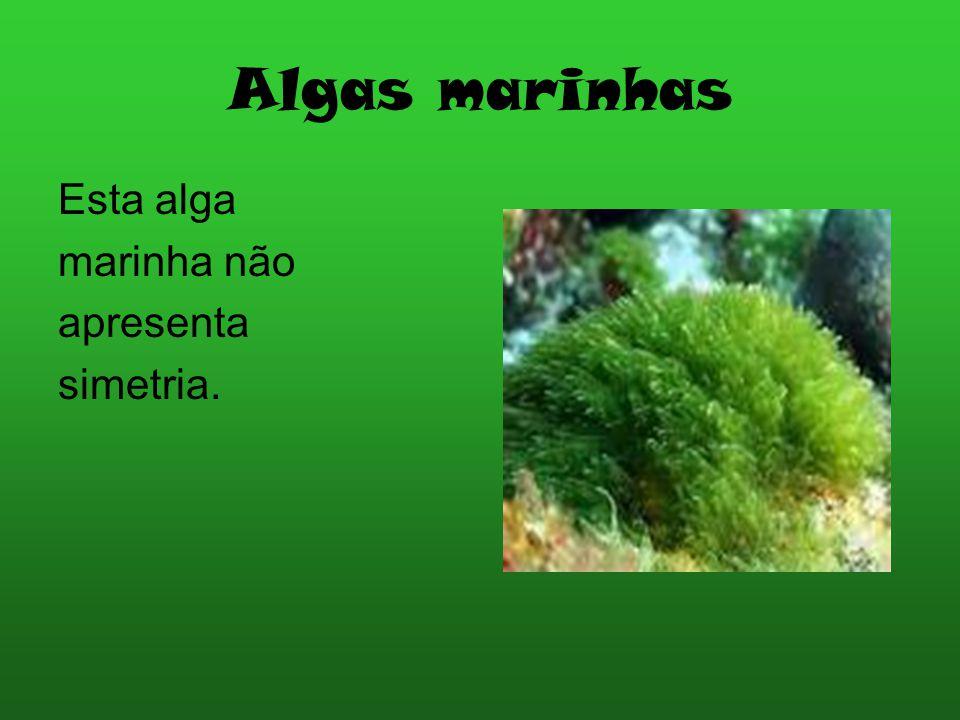 Algas marinhas Esta alga marinha não apresenta simetria.