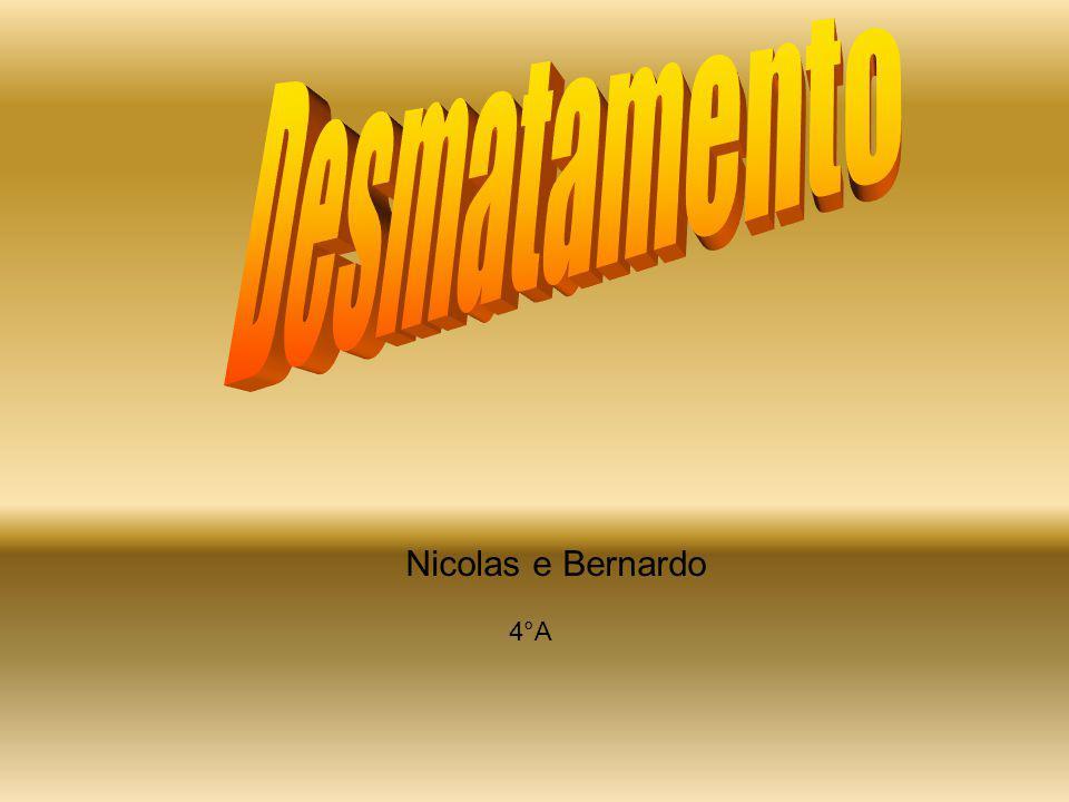 Desmatamento Nicolas e Bernardo 4°A