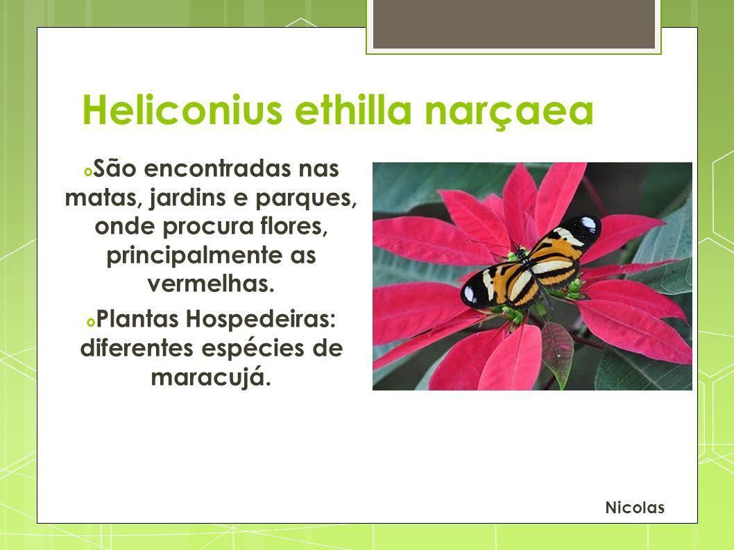 Plantas Hospedeiras: diferentes espécies de maracujá.