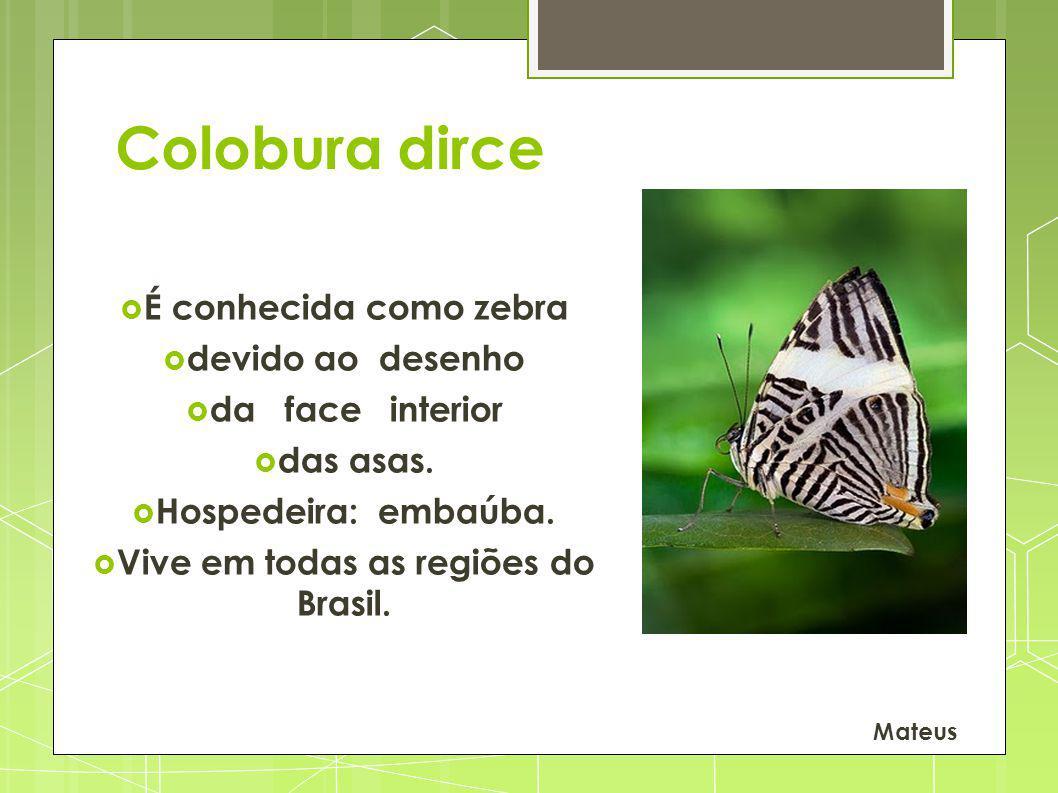 Vive em todas as regiões do Brasil.