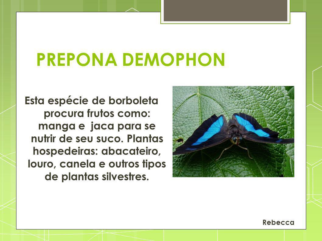 PREPONA DEMOPHON
