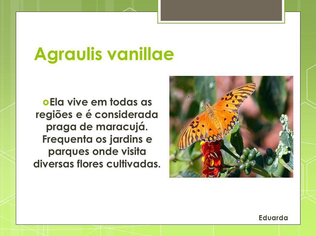 Agraulis vanillae