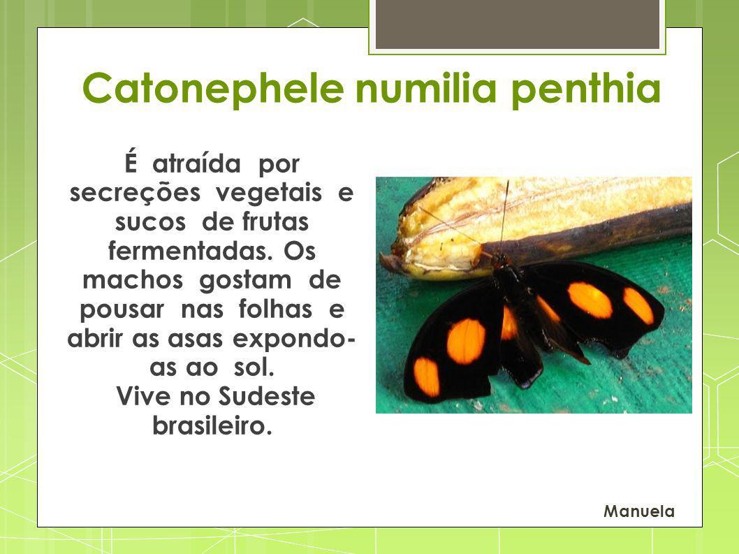 Vive no Sudeste brasileiro.