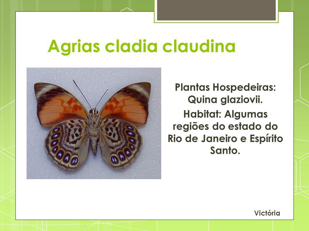 Agrias cladia claudina