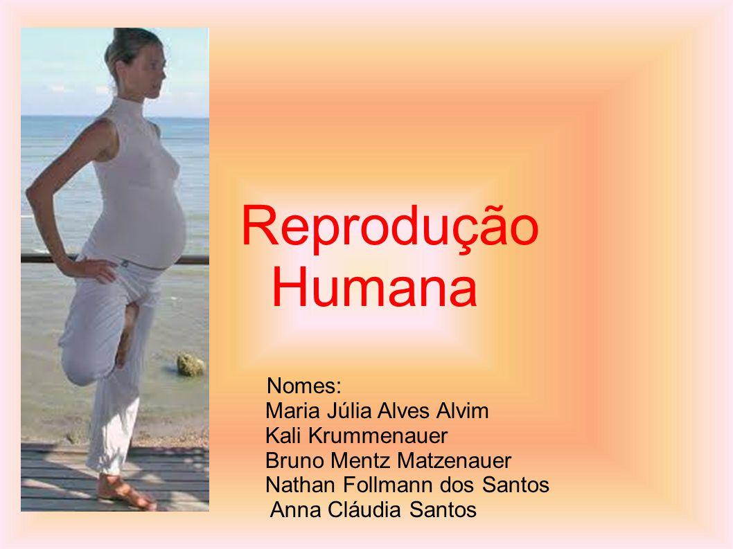 Reprodução Humana Nomes: Maria Júlia Alves Alvim Kali Krummenauer