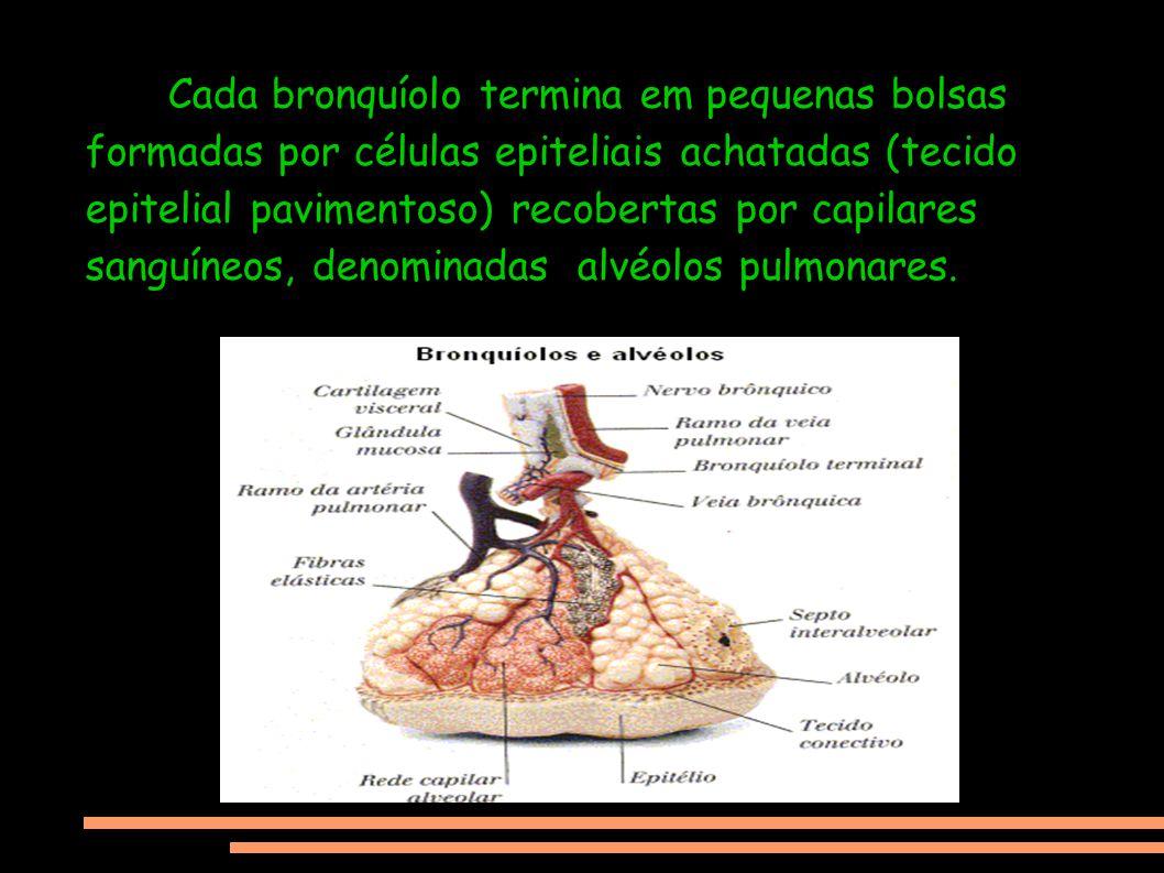 Cada bronquíolo termina em pequenas bolsas formadas por células epiteliais achatadas (tecido epitelial pavimentoso) recobertas por capilares sanguíneos, denominadas alvéolos pulmonares.
