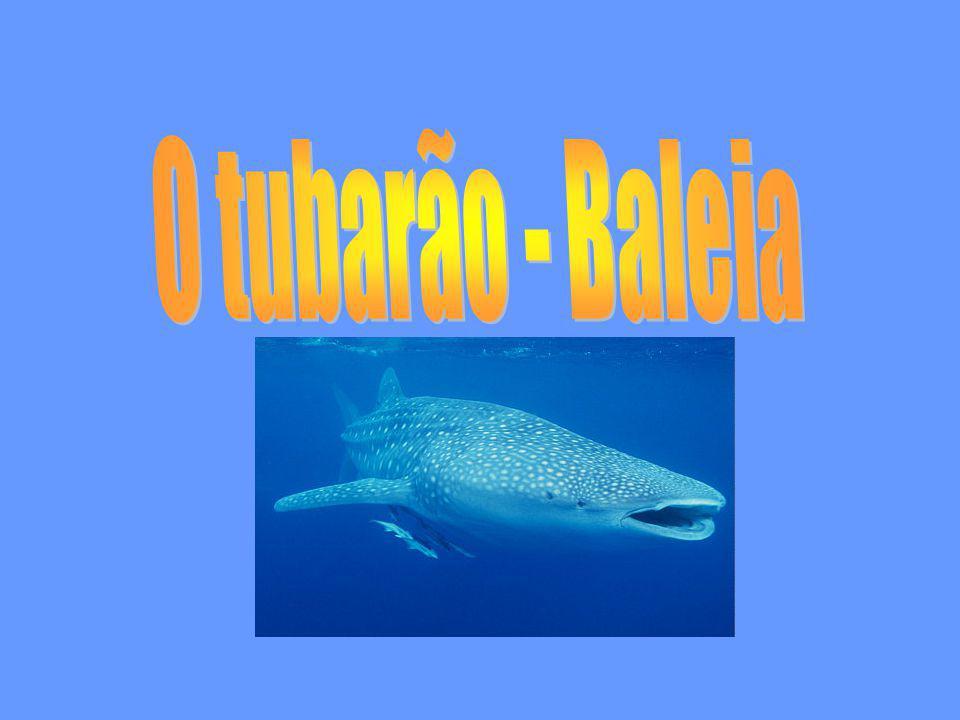 O tubarão - Baleia