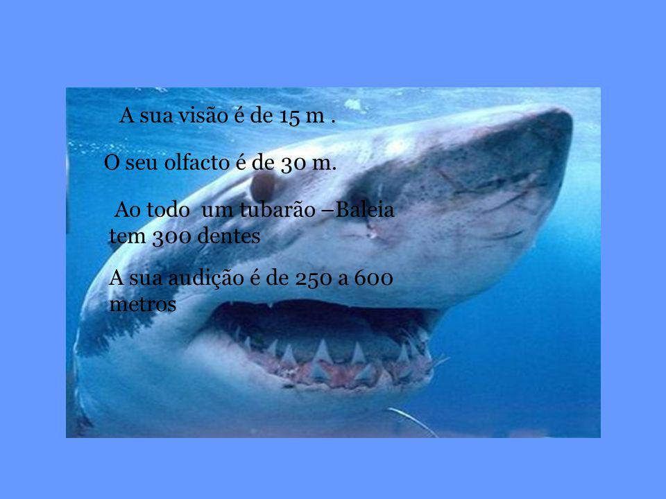 A sua visão é de 15 m . O seu olfacto é de 30 m. Ao todo um tubarão –Baleia tem 300 dentes.