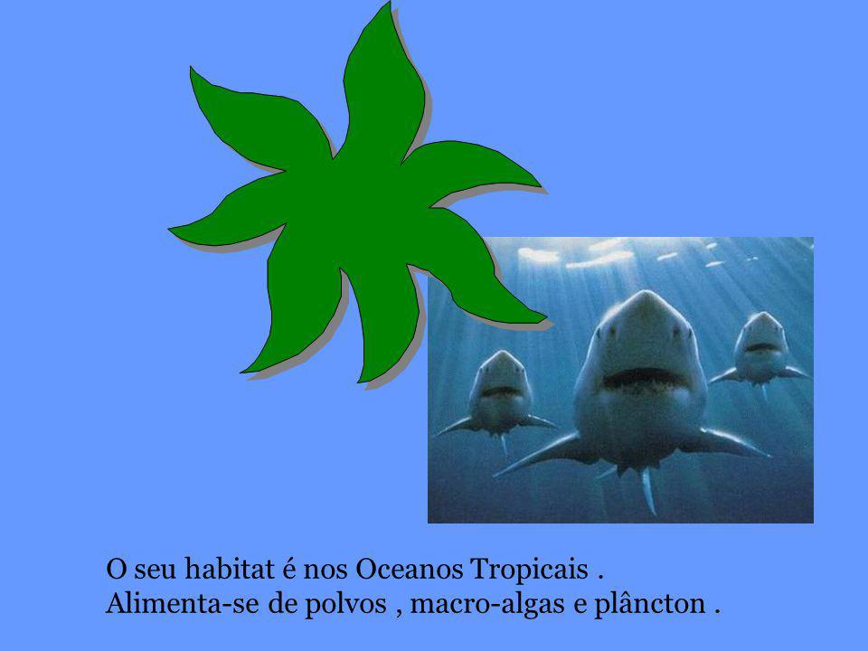 O seu habitat é nos Oceanos Tropicais .