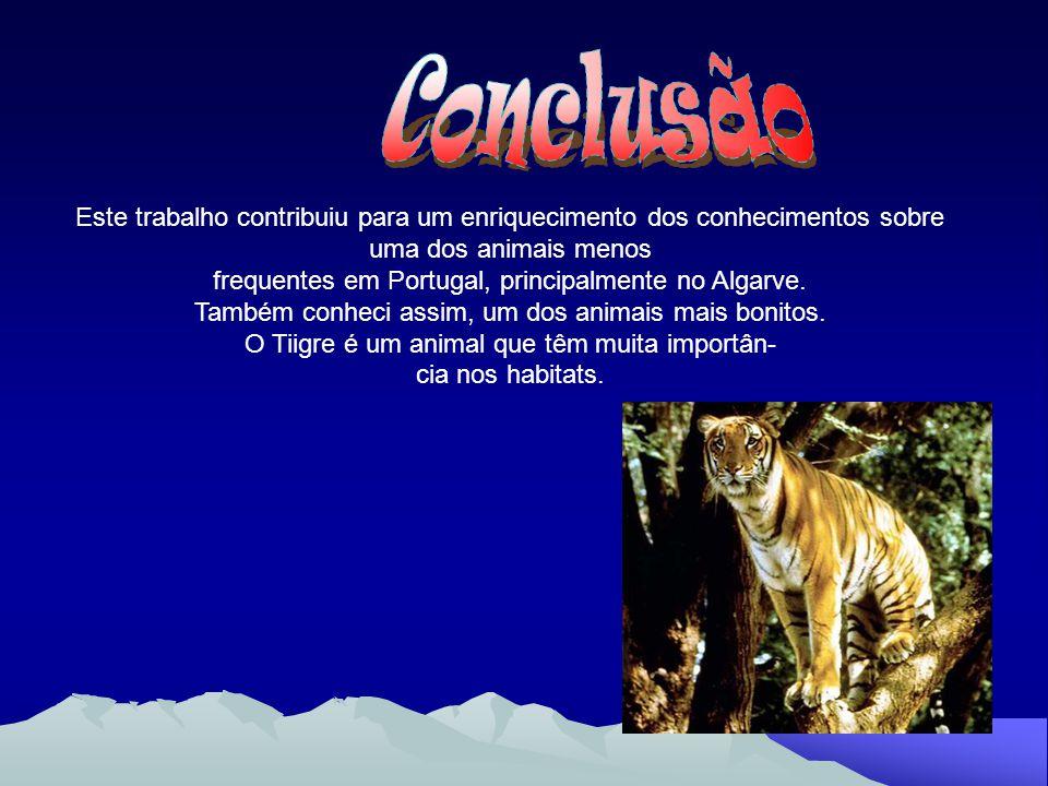 Conclusão Este trabalho contribuiu para um enriquecimento dos conhecimentos sobre. uma dos animais menos.