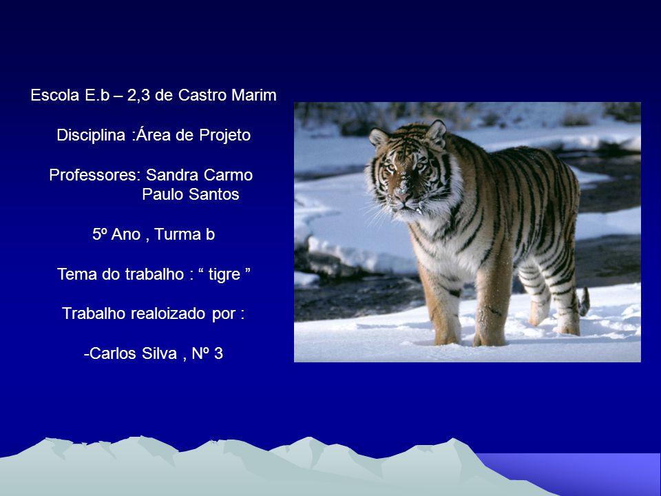 Escola E.b – 2,3 de Castro Marim Disciplina :Área de Projeto