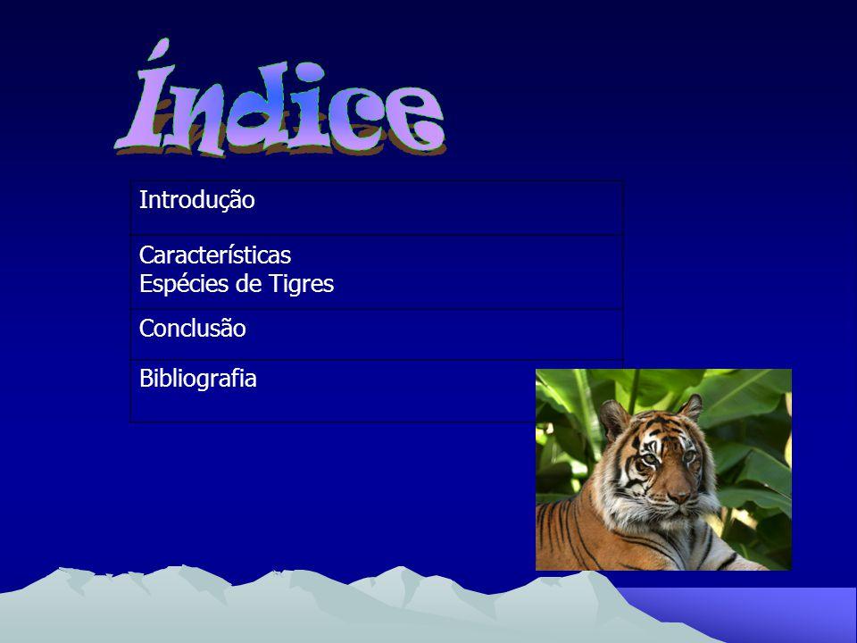 Índice Introdução Características Espécies de Tigres Conclusão