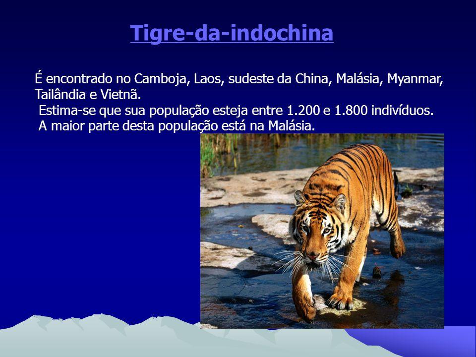 Tigre-da-indochina É encontrado no Camboja, Laos, sudeste da China, Malásia, Myanmar, Tailândia e Vietnã.