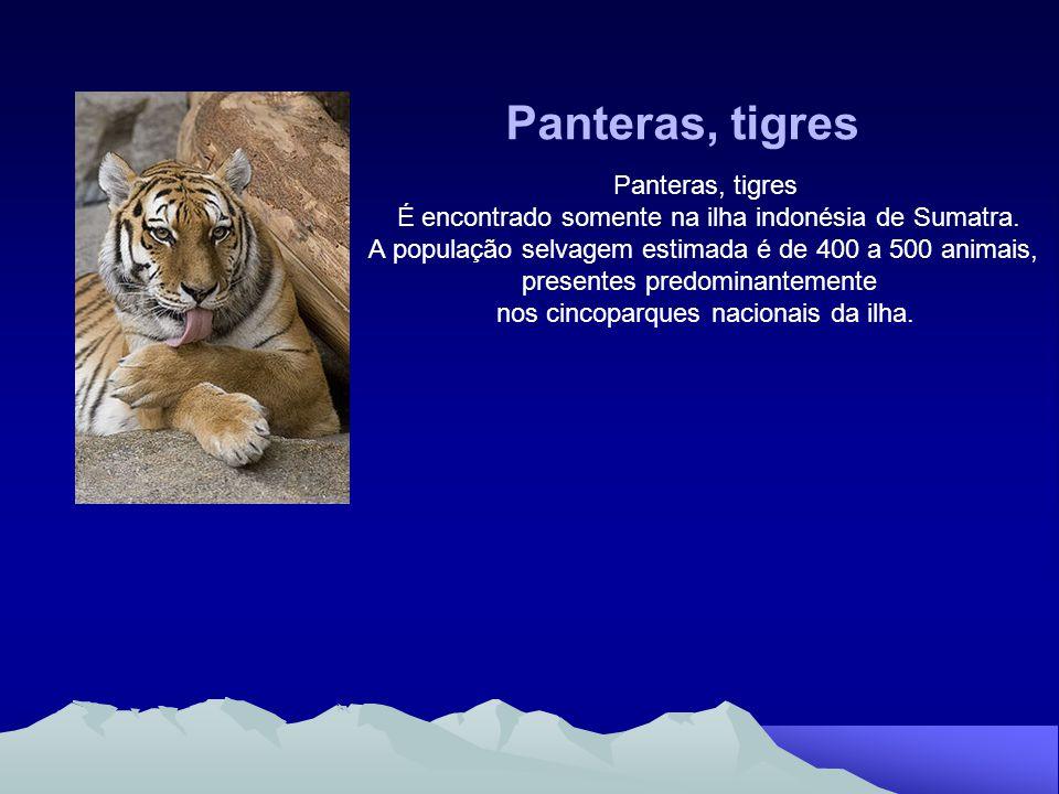 Panteras, tigres Panteras, tigres