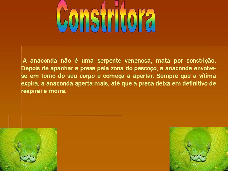 Constritora
