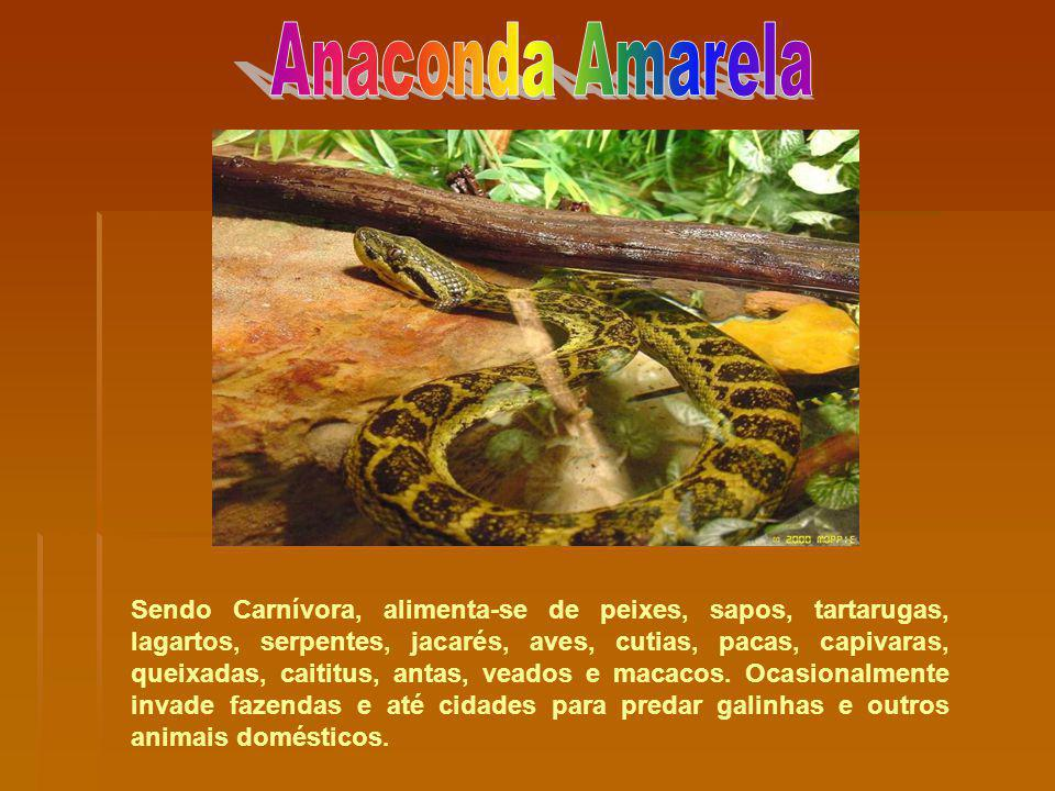 Anaconda Amarela