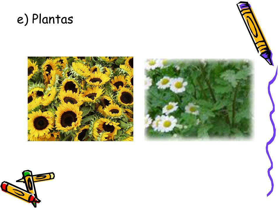 e) Plantas