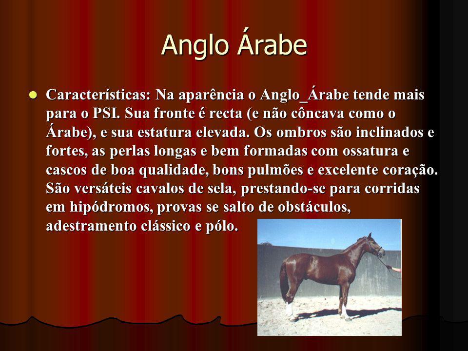 Anglo Árabe