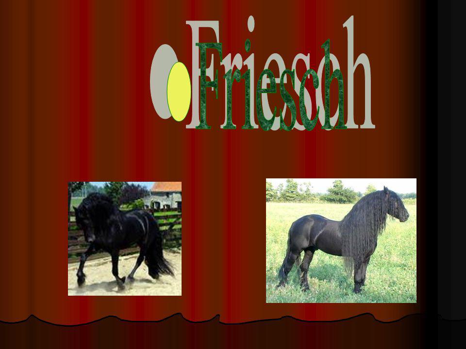 Friesch