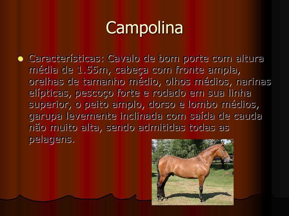Campolina