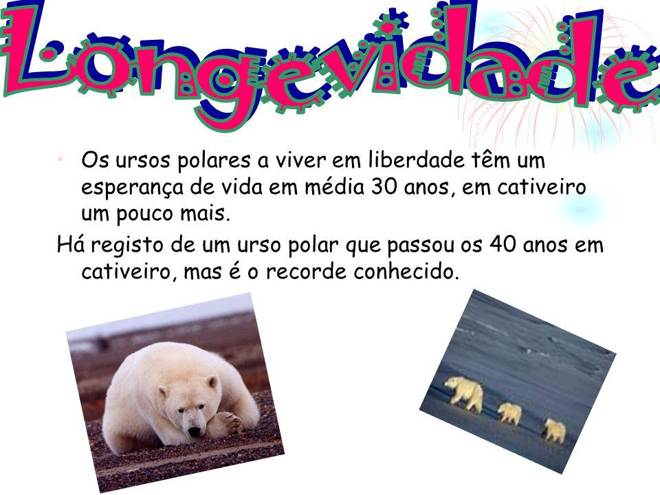 Longevidade Os ursos polares a viver em liberdade têm um esperança de vida em média 30 anos, em cativeiro um pouco mais.
