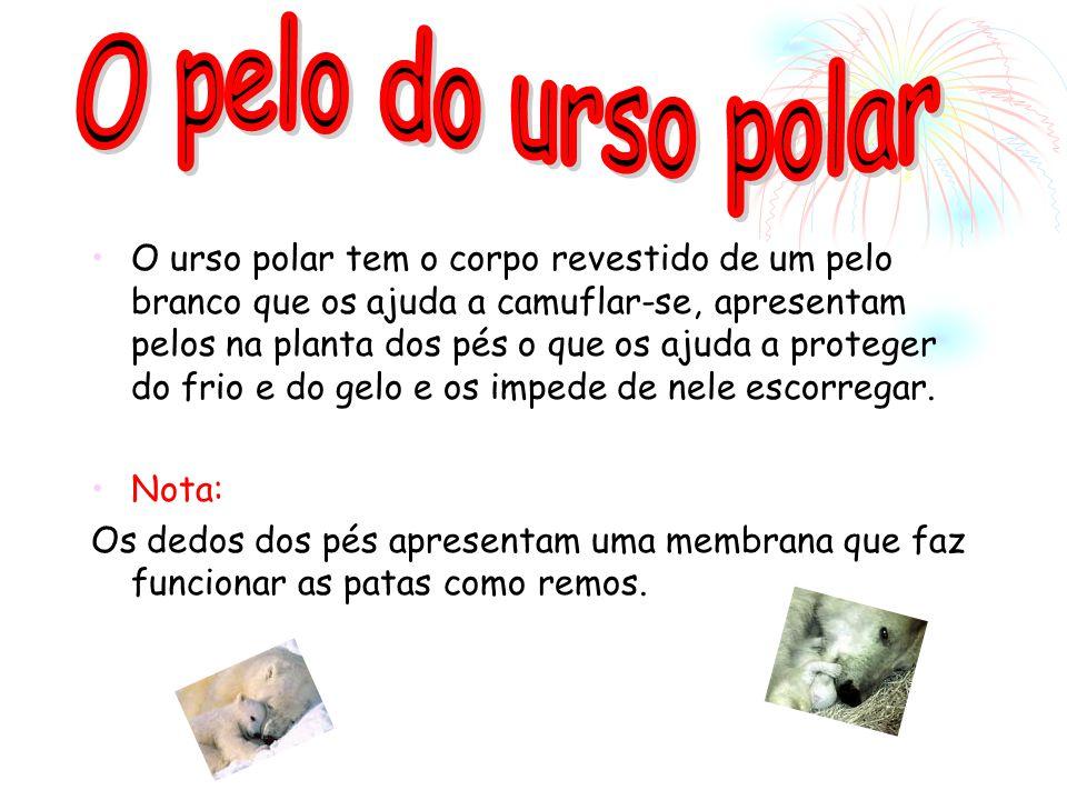 O pelo do urso polar