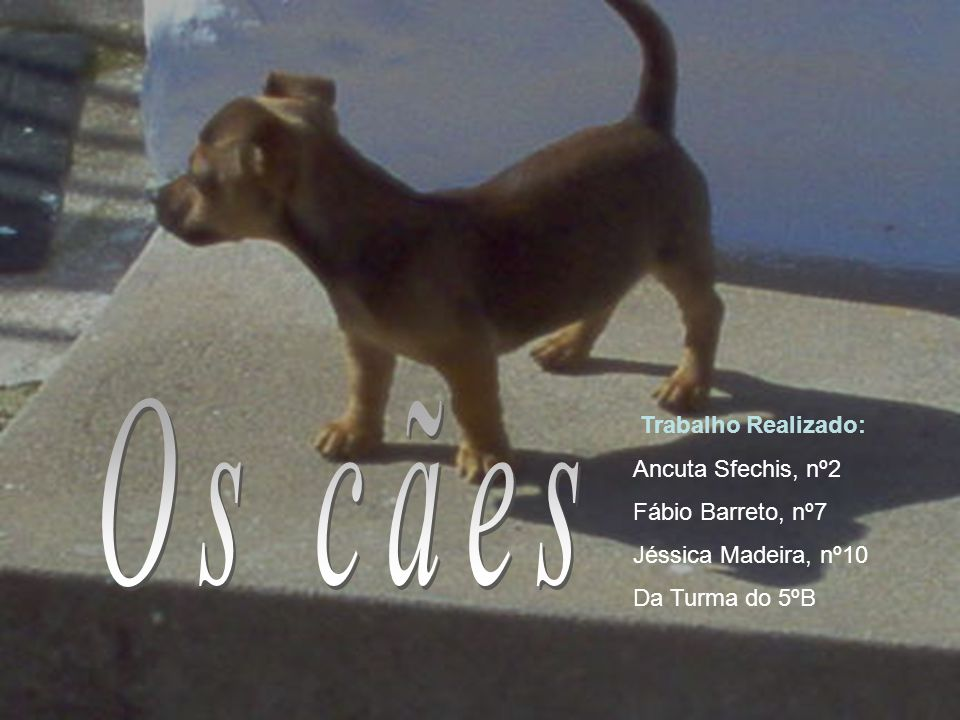 Os cães Trabalho Realizado: Ancuta Sfechis, nº2 Fábio Barreto, nº7