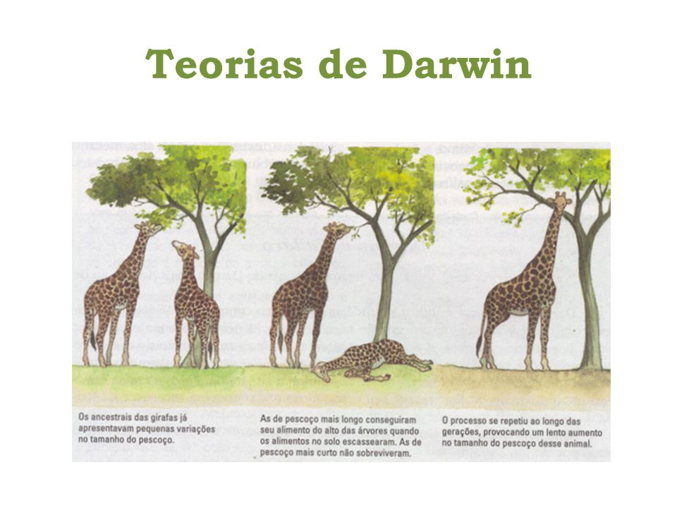 Teorias de Darwin