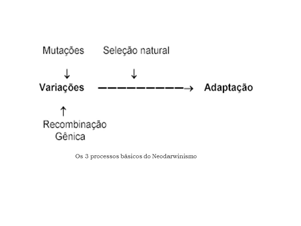 Os 3 processos básicos do Neodarwinismo