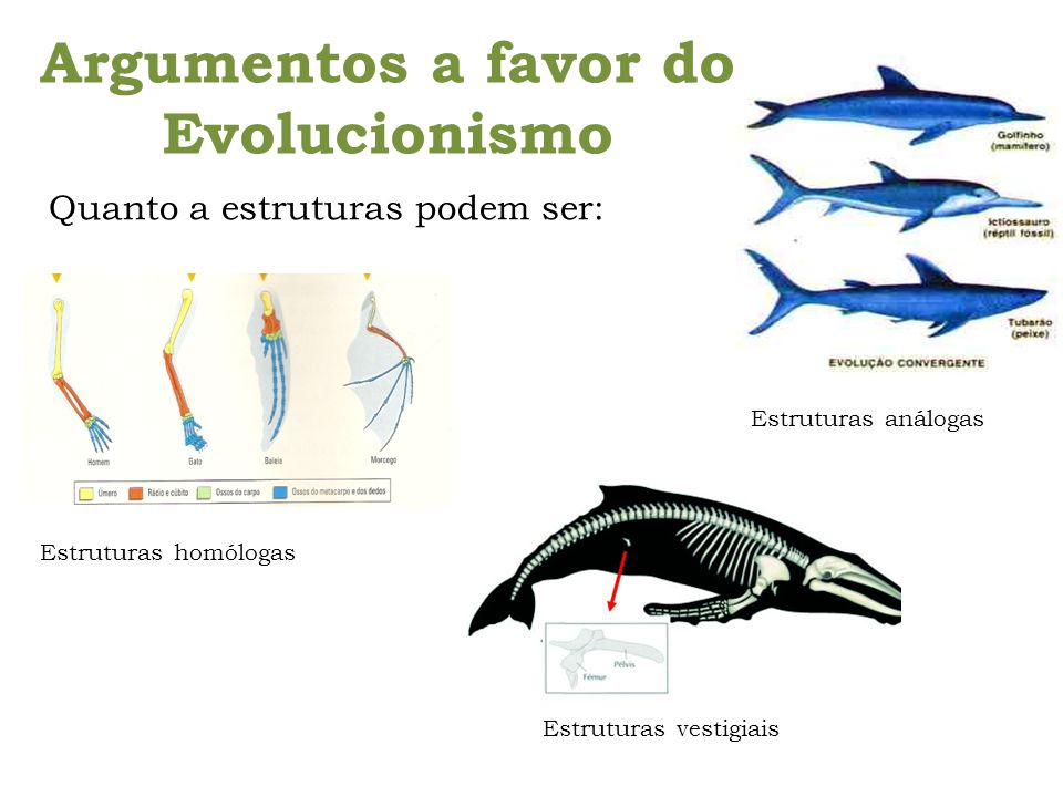 Argumentos a favor do Evolucionismo
