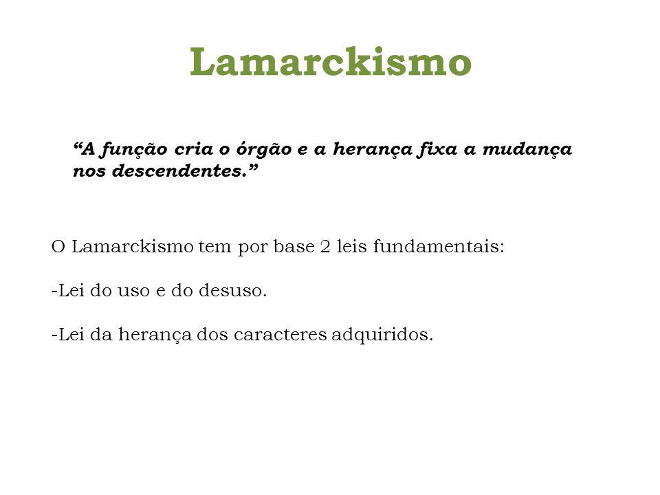 Lamarckismo A função cria o órgão e a herança fixa a mudança nos descendentes. O Lamarckismo tem por base 2 leis fundamentais: