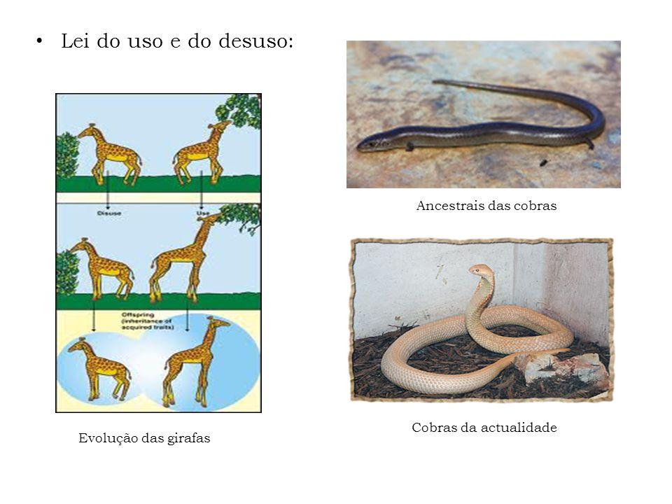 Lei do uso e do desuso: Ancestrais das cobras Cobras da actualidade