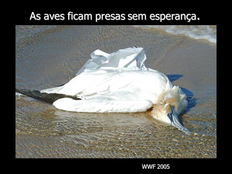 As aves ficam presas sem esperança.
