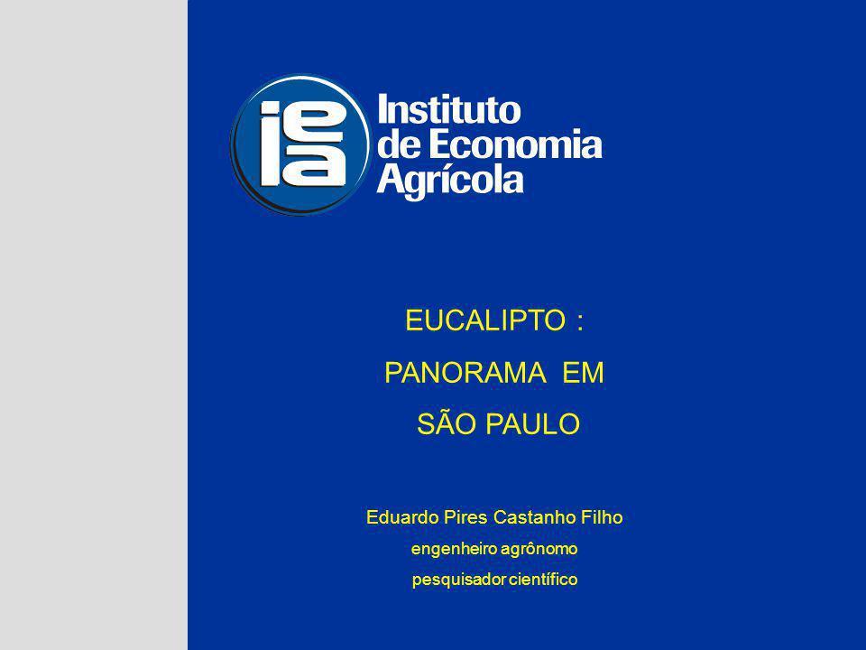EUCALIPTO : PANORAMA EM SÃO PAULO Eduardo Pires Castanho Filho