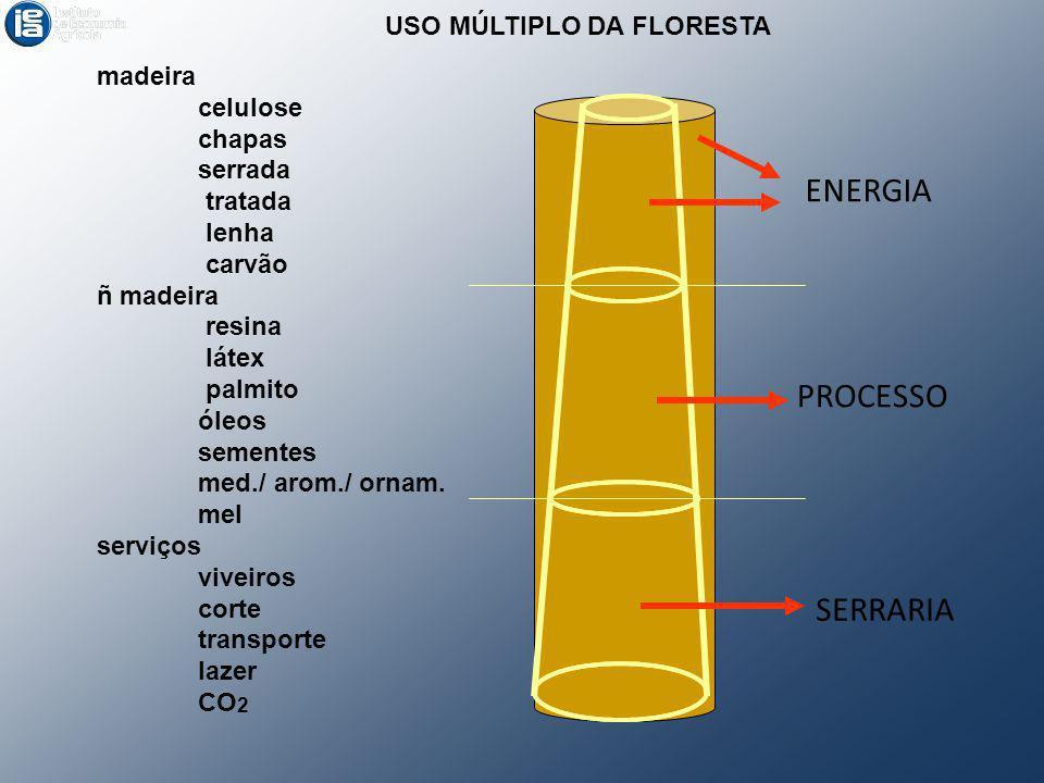 ENERGIA PROCESSO SERRARIA USO MÚLTIPLO DA FLORESTA madeira celulose