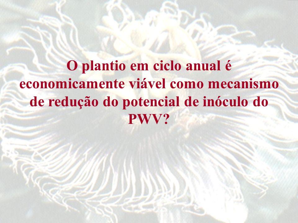O plantio em ciclo anual é economicamente viável como mecanismo de redução do potencial de inóculo do PWV