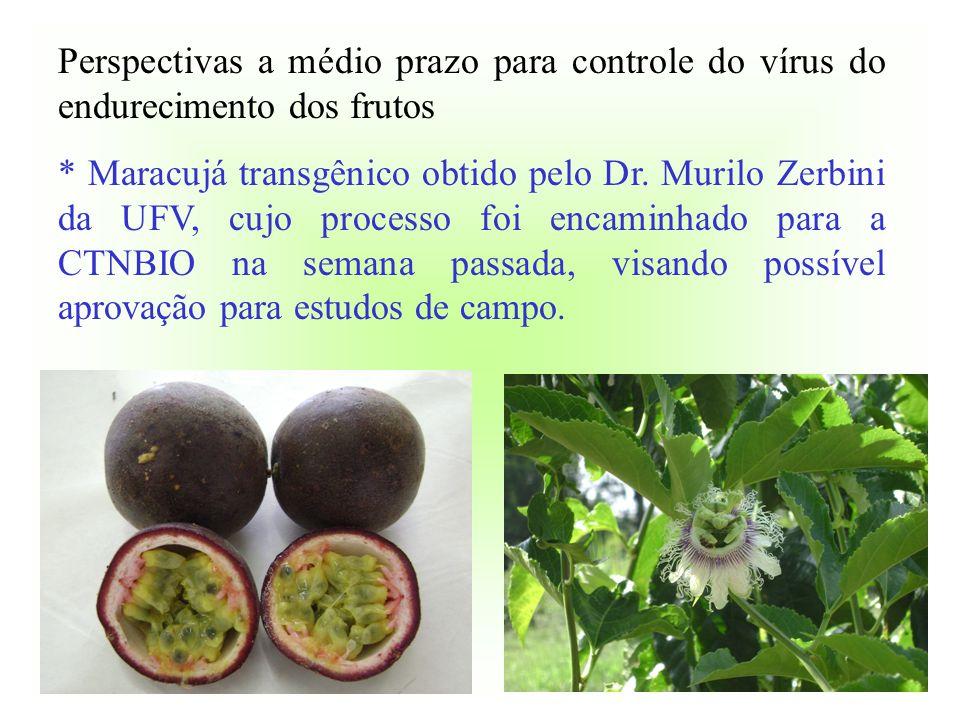 Perspectivas a médio prazo para controle do vírus do endurecimento dos frutos