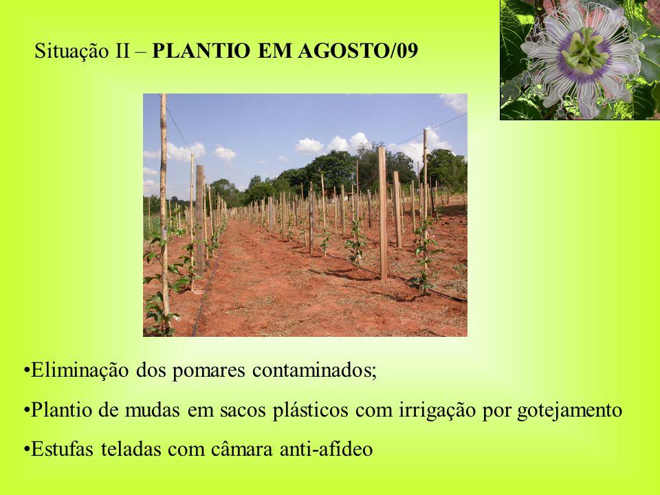 Situação II – PLANTIO EM AGOSTO/09
